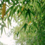 De bamboe eter